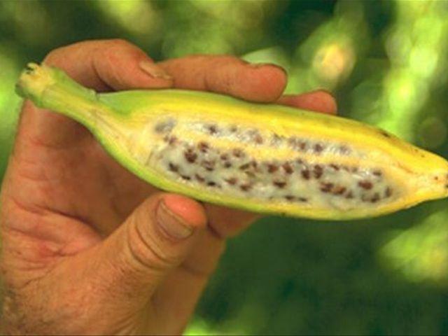 Бананы с косточкой