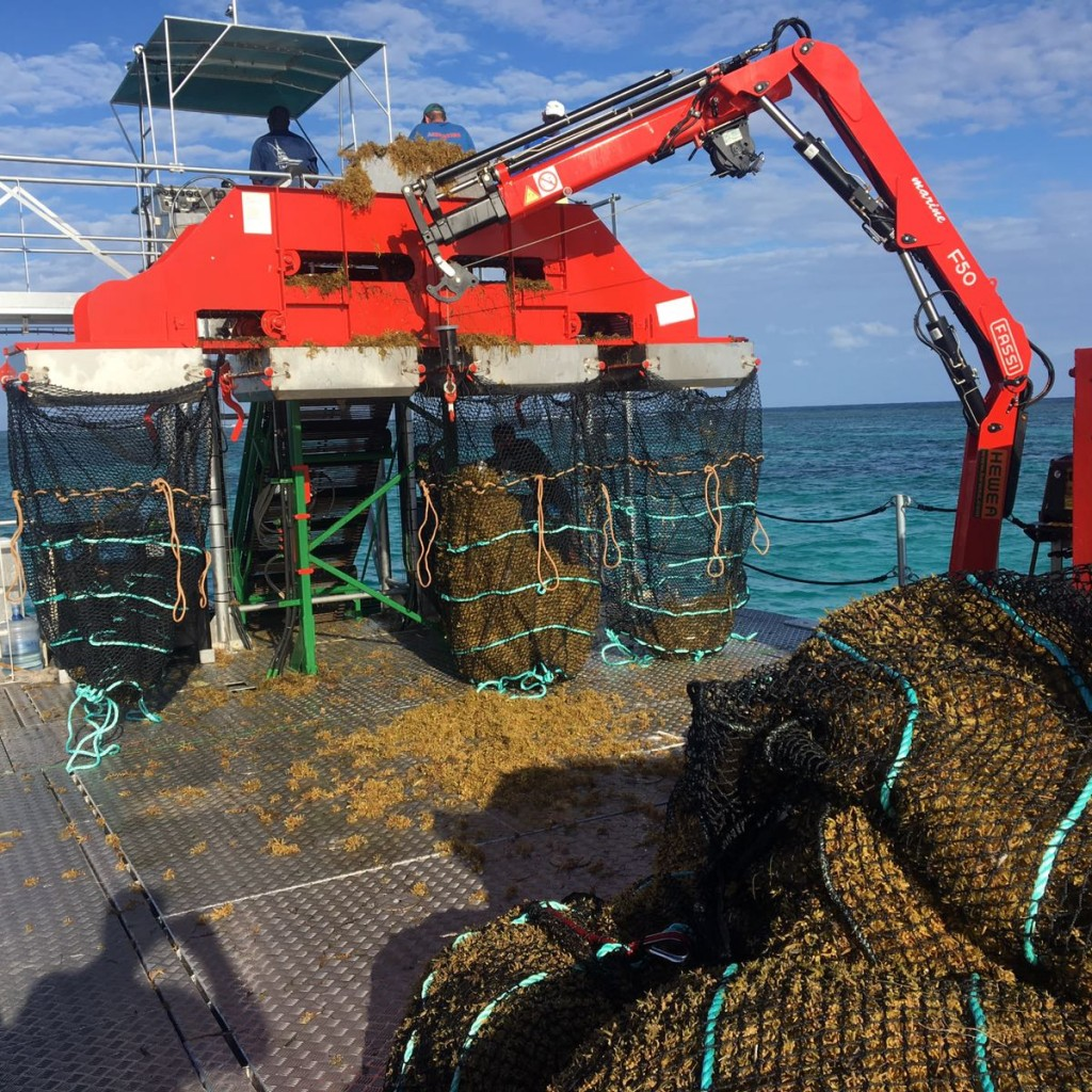 Rig aims to rescue eastern coasts swamped by seaweed